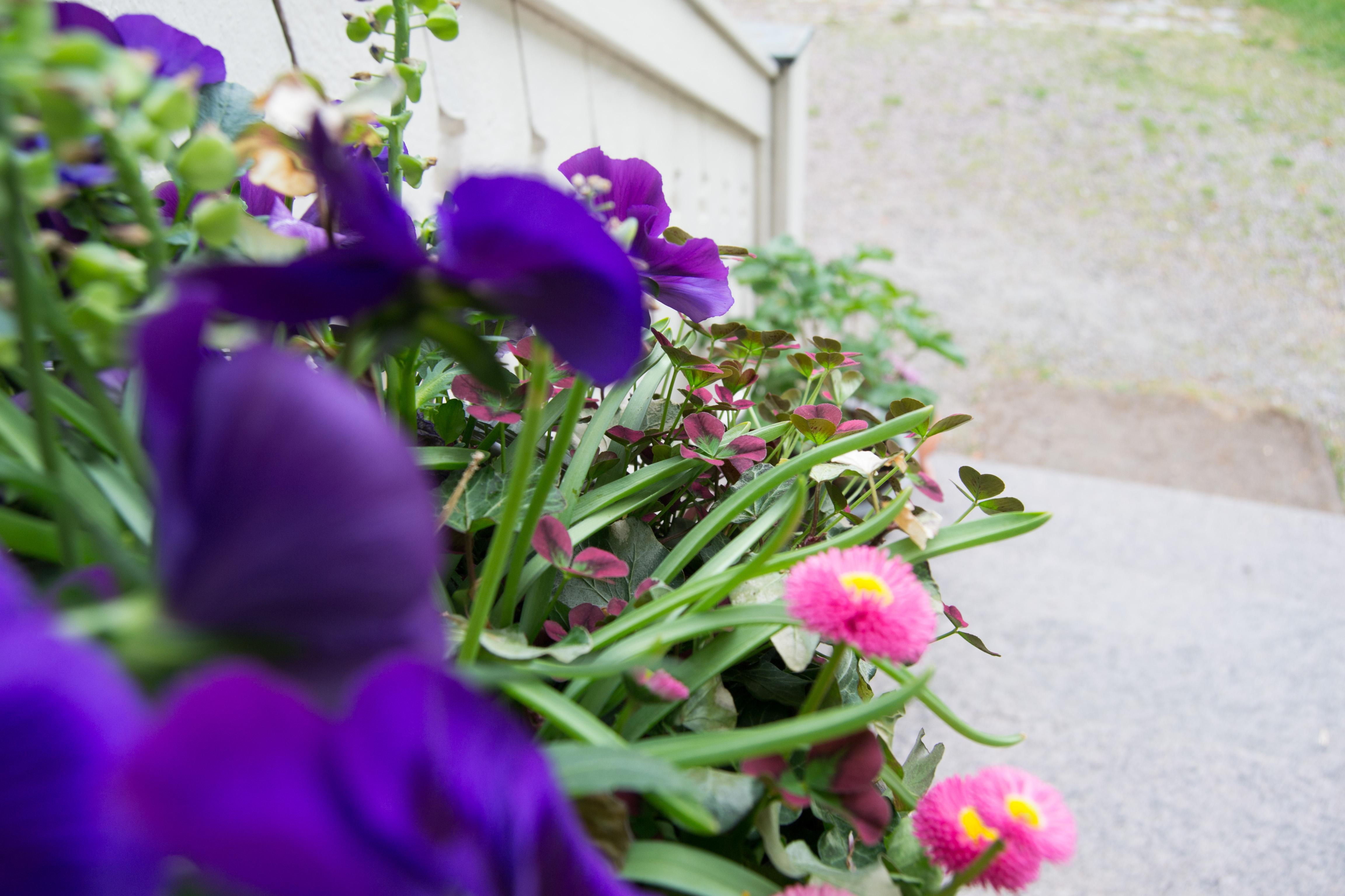 blommor bra